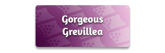 CTA: Gorgeous Grevillea!