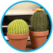 Jenny's Quick & Easy Cacti
