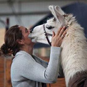 Long Island Yarn and Farm - Llama