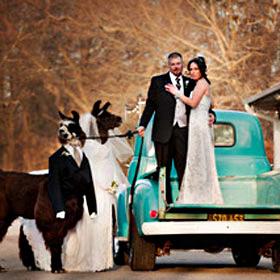Long Island Yarn and Farm - Wedding