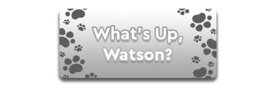 CTA: What's Up, Watson?