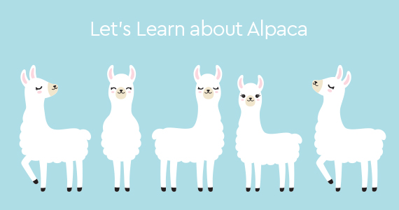 Where does it come from - Alpaca