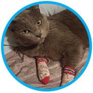 Jenny's Ameri-Kitty Tube Socks