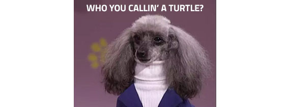 Who you callin' a turtle?