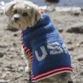 Stitch Mountain Team USA Dog Sweater