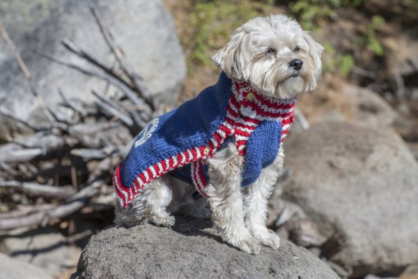 Knitted Dog Sweaters Free Patterns : Stitch Mountain - Team USA Dog Sweater Free Knitting Pattern at Jimmy Beans Wool