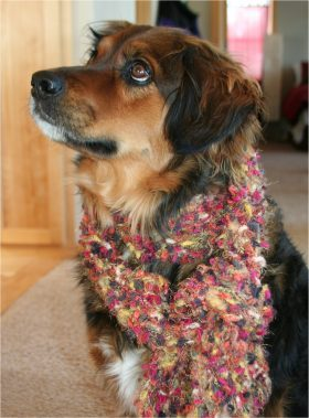 Buddy wearing the biased scarf!