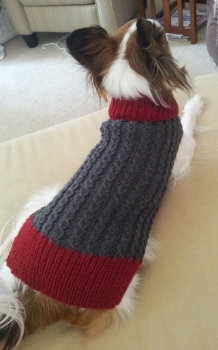 Heather's Dandy Dog Sweater for Sammy