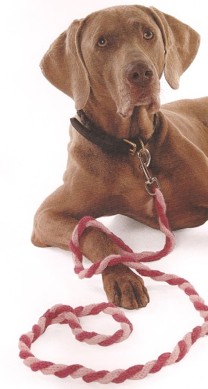 CPY Merino 5 Twisted I-Cord Leash Kit - Pets