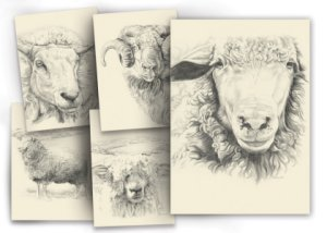 Lantern Moon Greeting Cards - Portrait Sheep Series Greeting Cards