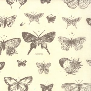 3 Sisters Papillon Fabric - Butterfly Etchings - Ivory Stone (4070 15)
